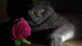 Kartka z pozdrowieniami z kotem i różą zdjęcie wideo