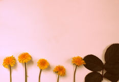 Kartka z pozdrowieniami, kwiaty, tło Zdjęcia Royalty Free