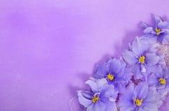 Kartka z pozdrowieniami z dekoracją w kącie fiołki Zdjęcie Royalty Free