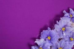 Kartka z pozdrowieniami z dekoracją w kącie fiołki Fotografia Royalty Free