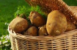 Kartoffel Stockbilder