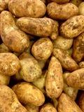 Kartoffel Lizenzfreie Stockfotos