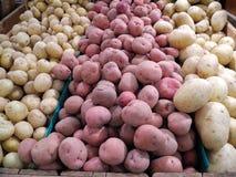 Kartoffel-Ernte stockfotografie