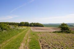 Kartoffel rudert Sandwaldland durch einen Feldweg in den szenischen Yorkshire-Wolds Stockfotos