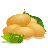 Kartoffel und grünes Blatt Stockfoto