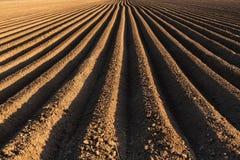 Kartoffelacker im Vorfrühling mit dem Säen rudert Betrieb zu Stockfoto