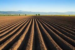 Kartoffelacker im Vorfrühling nach dem Säen - mit Furchenlauf Lizenzfreie Stockbilder