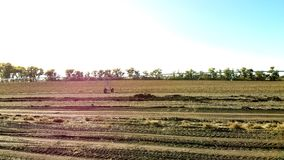 KartoffelackerBewässerungssystem FeldBewässerungssystem für besseres Pflanzenwachstum und weitere Bearbeitung und Wachsen von stock footage