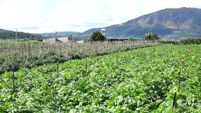 Kartoffelbauernhof an Don Duong-Bezirk, DA-Latstadt, Lam Dong-Provinz, Vietnam stock video