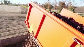 Kartoffelerntemaschine entlädt Kartoffeln in einem LKW für Transport Landwirtschaftliche Maschinen, die frische organische Kartof stock footage