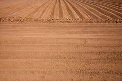 Kartoffelfeld lizenzfreies stockbild