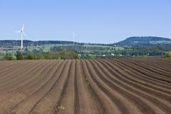 Kartoffelfeld lizenzfreie stockfotos