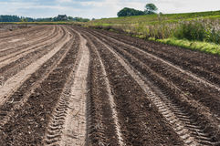 Kartoffelfeld nachdem dem Ernten Stockbild