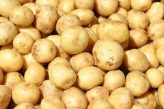 Kartoffelhintergrund Stockfotos