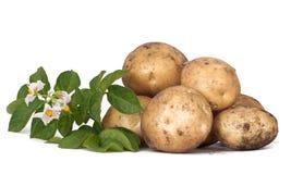 Kartoffelknollen Lizenzfreie Stockbilder