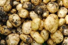 Kartoffeln. Lizenzfreie Stockfotografie
