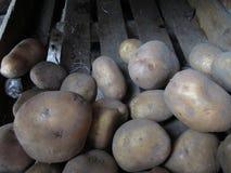 kartoffeln Stockbilder