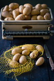 Kartoffeln auf Gewicht Stockfoto