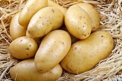 Kartoffeln auf Stroh Stockbilder