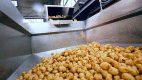 Kartoffeln fallen in einen Kanister stock video