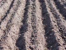 Kartoffeln im Garten im Fr?hjahr pflanzen stockbilder