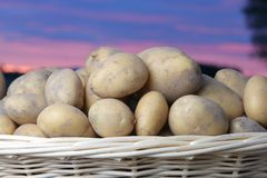 Kartoffeln im Korb Lizenzfreies Stockbild