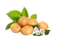 Kartoffeln lokalisiert auf weißem Hintergrund Stockbilder