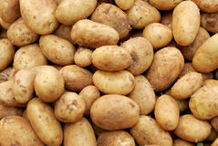 Kartoffeln, Nahrung des rohen Gemüses Stockfoto