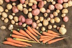 Kartoffeln und Lebensmittel des rohen Gemüses der Karotten für Musterbeschaffenheit und -hintergrund Lizenzfreies Stockfoto