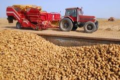 Kartoffeln und Traktor auf dem Kartoffelgebiet Lizenzfreie Stockfotografie