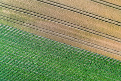 Kartoffeln und Weizen auf einem Gebiet in der Bas-Rhinabteilung von Frankreich Lizenzfreies Stockbild
