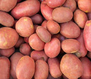 Kartoffelstapel Stockbilder