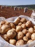 Kartoflana torba Zdjęcie Royalty Free
