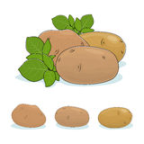 Kartoflany warzywo, Jadalna owoc Obrazy Stock