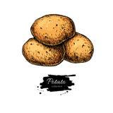 Kartoflany wektorowy rysunek Odosobniona ręka rysować grule warzywo Obraz Stock