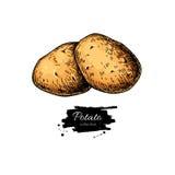 Kartoflany wektorowy rysunek Odosobniona ręka rysować grule warzywo Fotografia Royalty Free