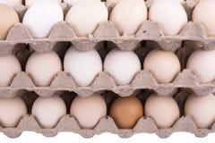 Karton Eier Stockbild