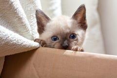 karton nad pussycat kartonem zdjęcia royalty free