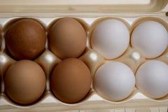 Karton van eieren Royalty-vrije Stock Foto