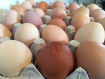Karton van eieren van verschillende kleuren royalty-vrije stock foto's