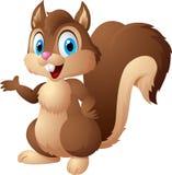 Kartoneichhörnchen, das Eichel hält Lizenzfreies Stockbild