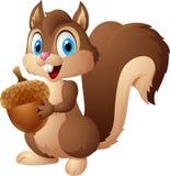 Kartoneichhörnchen, das Eichel hält Lizenzfreie Stockfotografie