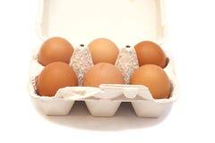 Kartonkasten mit sechs Eiern Stockfotos