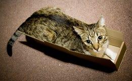 kartonu pudełkowaty kot Zdjęcia Royalty Free