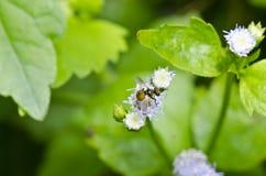 kartotek kwiatu owoc hover Zdjęcie Royalty Free