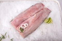 Kartoteki ryba fotografia stock