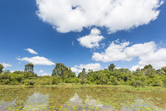 Karura Forest in Nairobi, Kenya with deep blue sky Stock Images