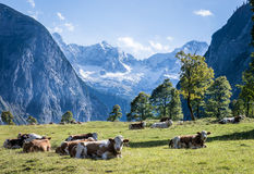 Karwendel Stock Photography