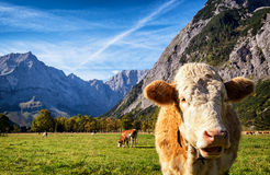 Karwendel Berge Stockfoto