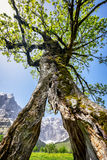 Karwendel Royalty Free Stock Photography
